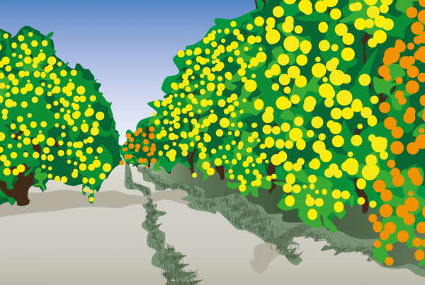 sydamerika landskab citrus plantage